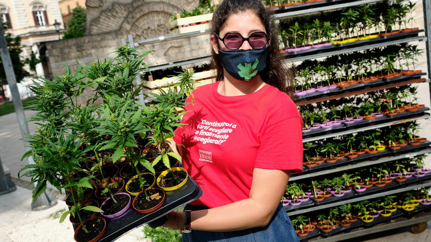 Les démocrates américains veulent légaliser totalement le cannabis au niveau fédéral