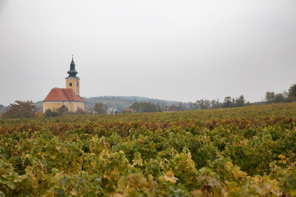 Op zoek naar de ziel van Oostenrijkse wijn - Vinothek Roschitz